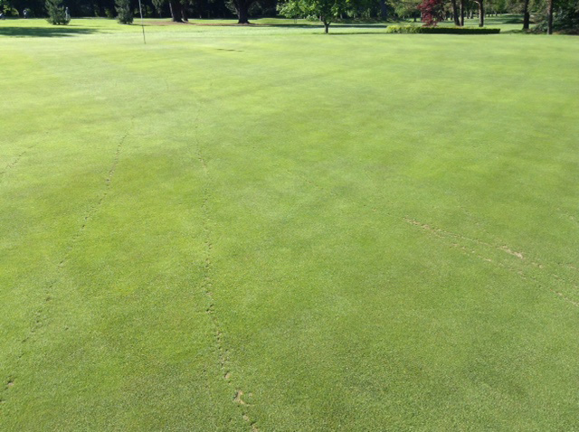 Green repaired