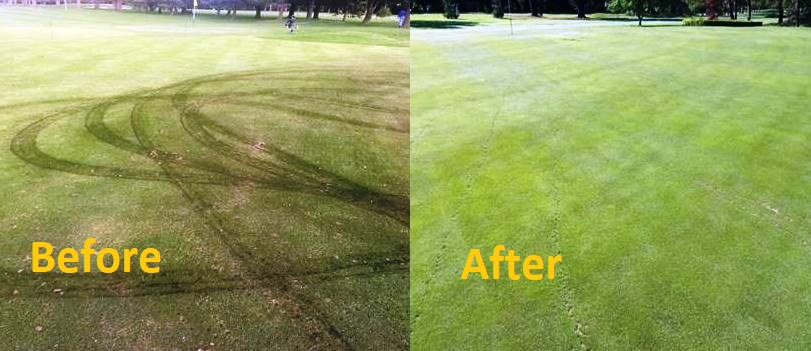 Oil soaked grass is remediated using S-200 Oilgone