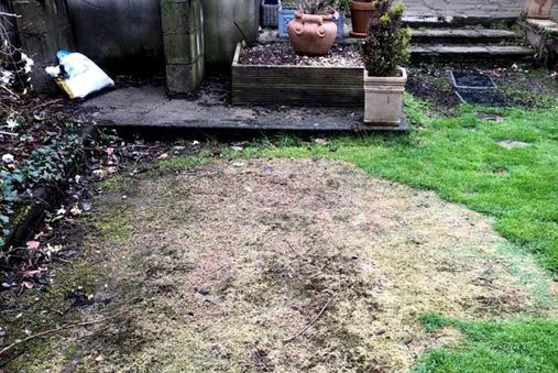 Kerosene spill damaged lawn