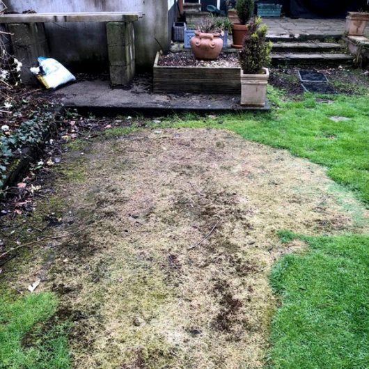 Grass damaged by a spill of home heating oil. S-200 Oilgone can treat oil spill son grass